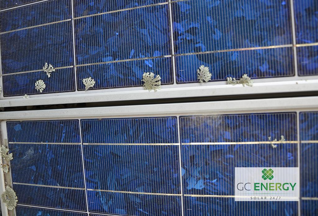 Solar panels needing a clean, growing algae